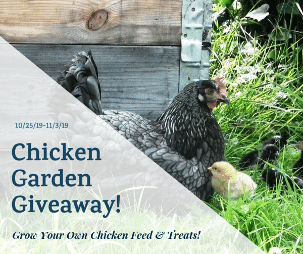 The Chicken Garden Giveaway