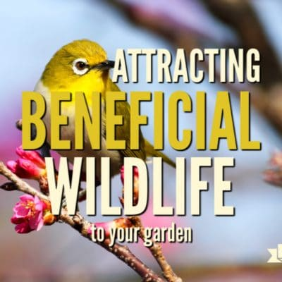 Create a Climate-friendly Garden by Attracting Beneficial Wildlife