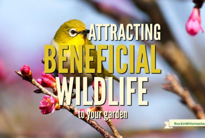 yellow bird sitting on a flowering tree branch, Text overlay reads: attracting beneficial wildlife to your garden