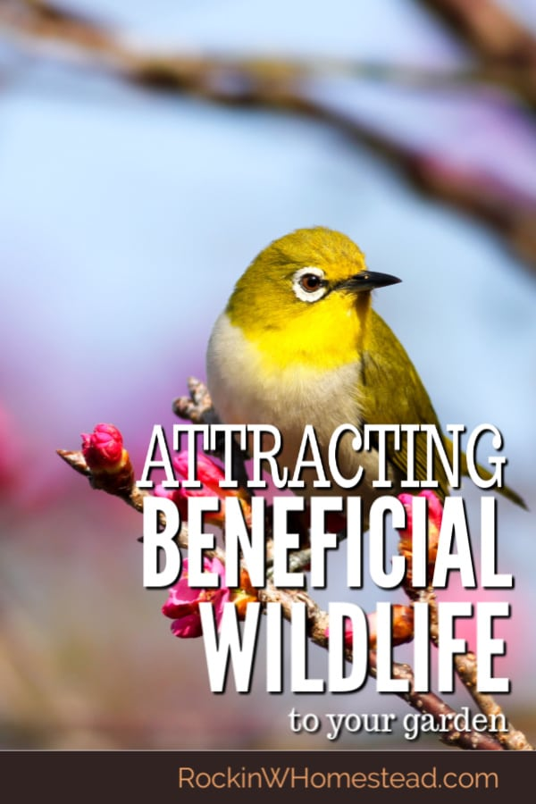 Attracting beneficial wildlife is a blessing and a necessity for your garden. These animals keep pests at bay by offering natural ways to reduce them.