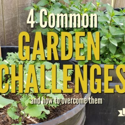 4 Common Garden Challenges and How to Overcome Them