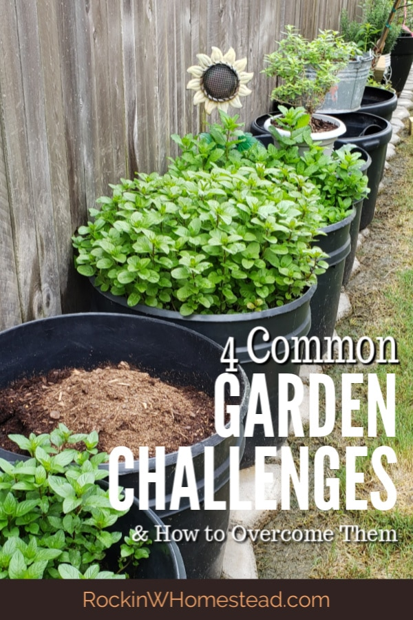 Everyone experiences these 4 common garden challenges when they are getting started preparing, planting, growing, and harvesting their home garden. Here's how to overcome them.