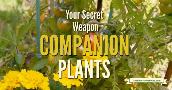 tomaotes and marigold companion plants. Companion plants like being together, they are best friends in the garden. Get the companions for 10 of your favorite vegetable garden plants.