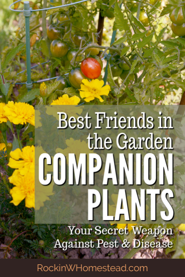 Companion plants like being together, they are best friends in the garden. Get the companions for 10 of your favorite vegetable garden plants.