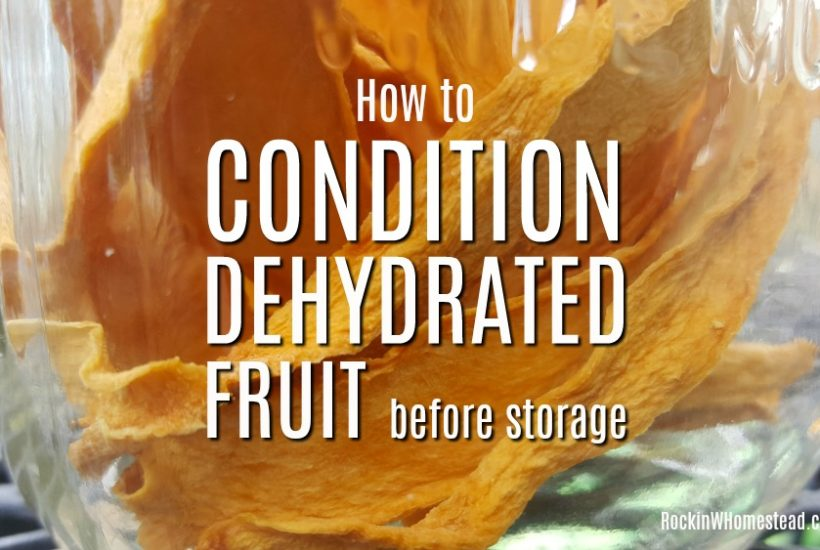 "How to condition dehydrated fruit. To obtain a longer shelf life with dehydrated fruit, we use a process called ""conditioning"" to make sure our dried food is ready for storage 