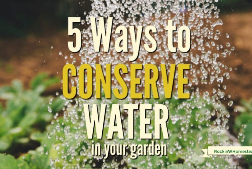 Xeriscaping can be a beautiful way to create a yard that is open to conserving water, is budget-friendly, and also inviting. There is an abundance of water-friendly plants to choose for any zone you might live in.