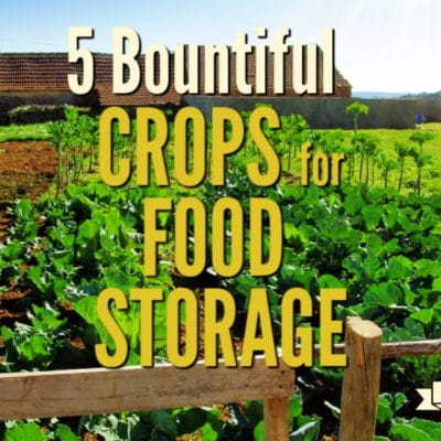 5 Bountiful Crops for Food Storage