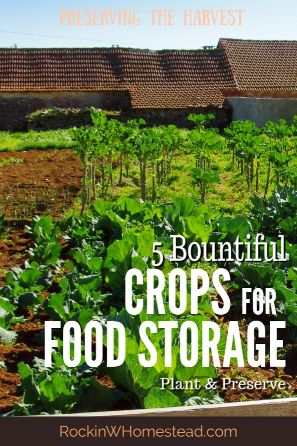 There are many crops to choose for your garden, but these 5 crops are tailor-made for increasing the bounty of your garden. Learn how to properly store your garden's harvest and you'll be guaranteed to have plentiful food throughout the whole year.