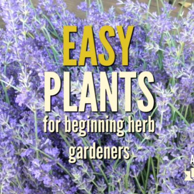 10 Easy Plants for Beginning Herb Gardeners