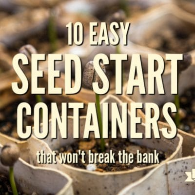 10 Easy Seed Starting Containers that Won't Break the Bank