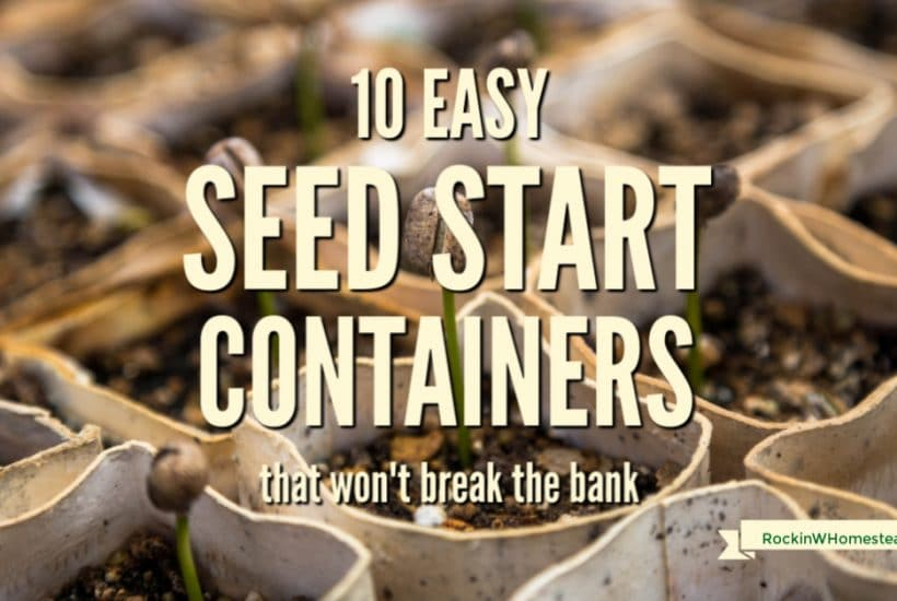 Get a good start on your seeds with these 10 easy seed starting containers that won't break the bank.