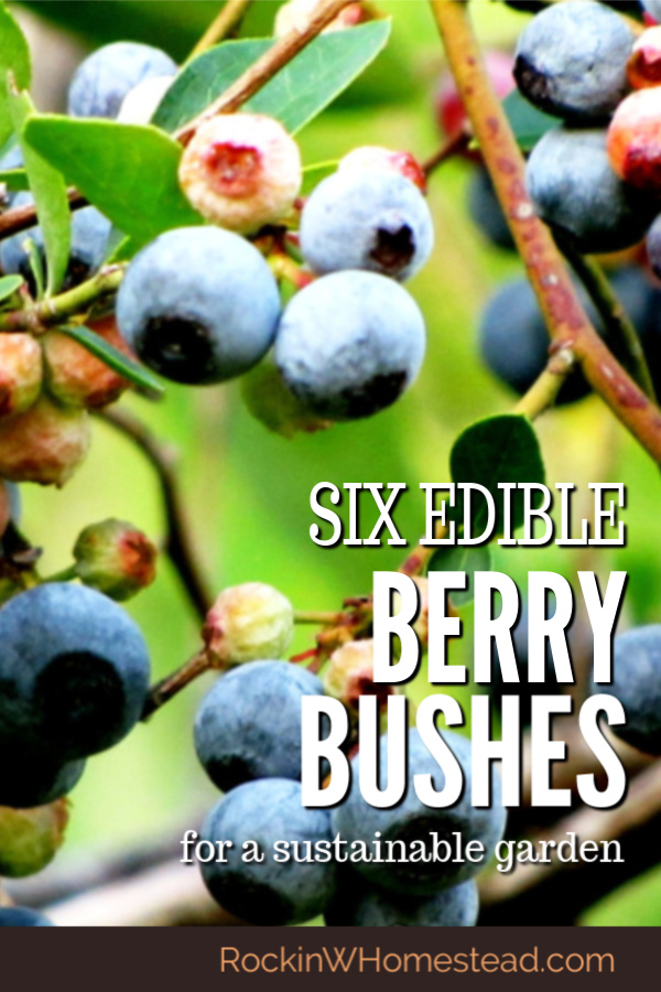 These are many ways to include edibles in your landscaping plans.  Plant one, or all, of these six edible berry bushes for a sustainable garden.