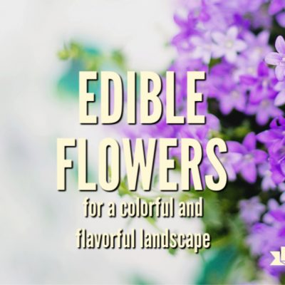 Edible Flowers for a Colorful and Flavorful Landscape