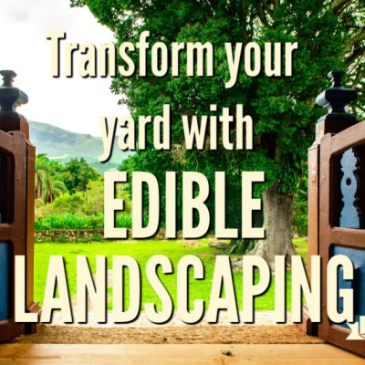Turn Your Yard into a Food Forest with Edible Landscaping
