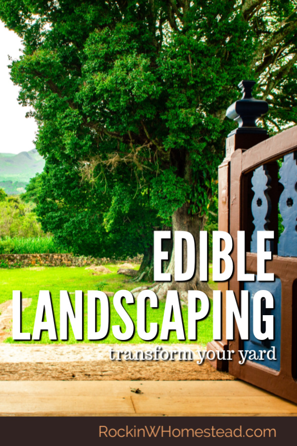 Edible landscaping has become more sought after as individuals realize that a garden can be more than just beautiful to look at.