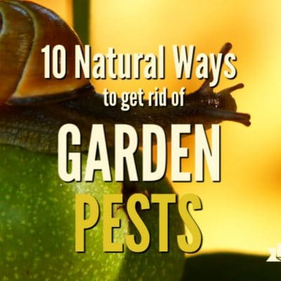 10 Natural Ways to Get Rid of Garden Pests