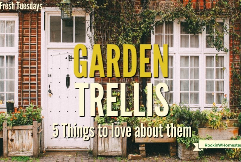 5 things to love about garden trellis