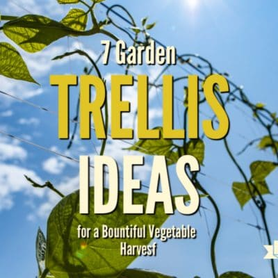 7 Garden Trellis Ideas for a Bountiful Vegetable Harvest