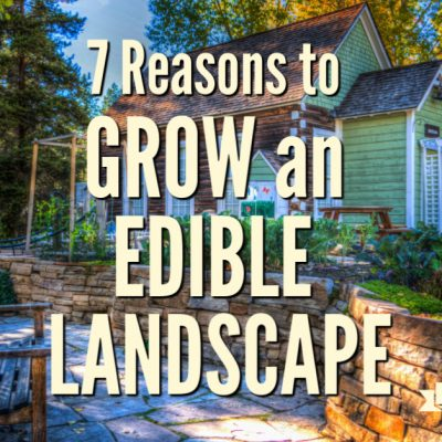 Seven Reasons to Grow Edible Landscape Plants