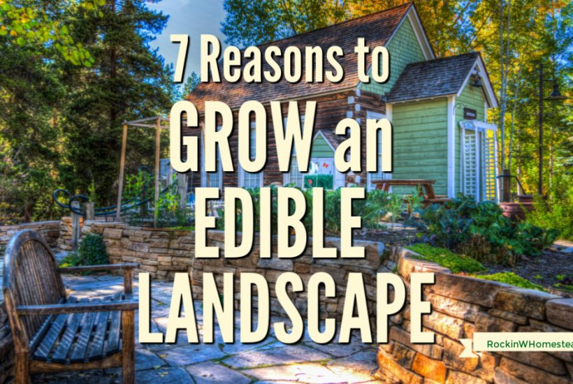 There are many reasons to grow edible landscape plants. Here are seven great motivations to get you interested in starting your edible landscaping adventures today.