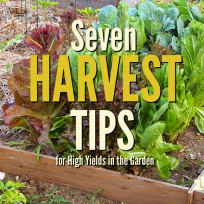 7 Harvest Tips for High Yields in the Garden