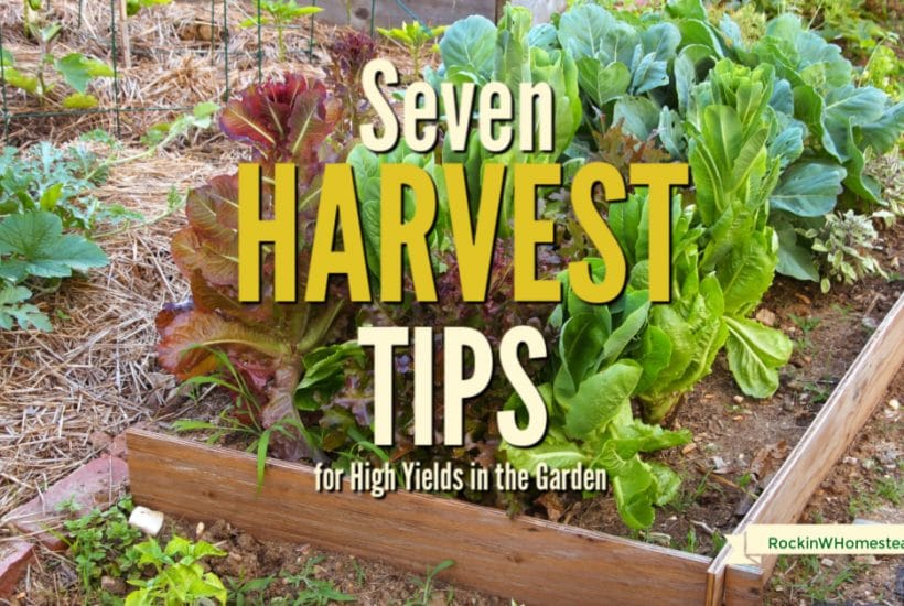 Your successful harvest starts when you plant your garden in the spring. Follow these seven harvest tips to get the best yields in your garden this year.