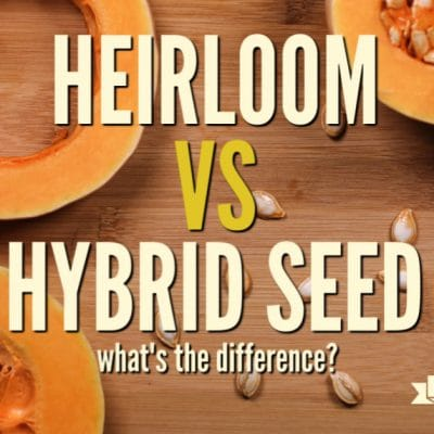 Heirloom vs Hybrid Seeds: What's the Difference?
