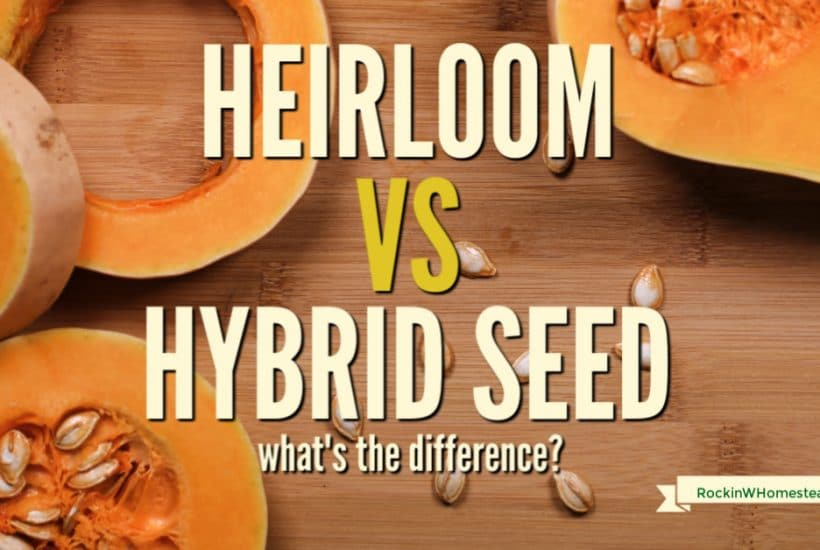 "When shopping for seeds at your local garden center or seed catalog, you may notice some are marked 'heirloom,"" while others are labeled ""hybrid."" Have you ever wondered what these terms mean and if one is better for you than the other?"