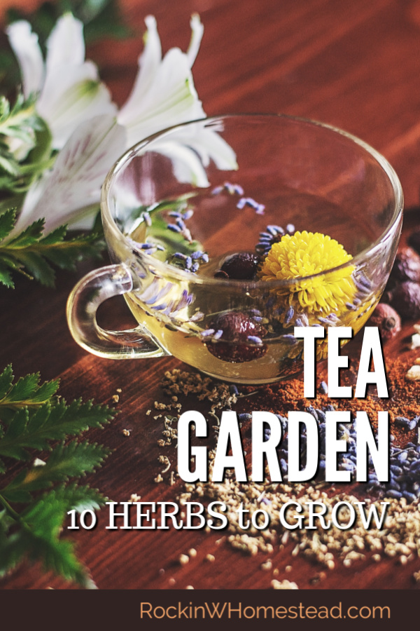 Planning ahead for your dream homestead? Why not have a tea garden and grow beneficial herbs right out your back door!