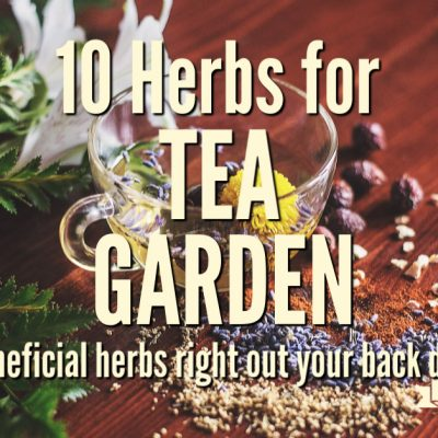 10 Herbs to Grow for a Tea Garden