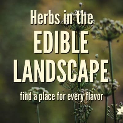 Using Herbs in Your Edible Landscape