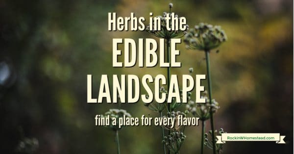 As you are creating your edible landscape, you will likely be interested in including herbs. Many people are aware of the versatility of herbs, and the many uses there are for them in every kitchen.