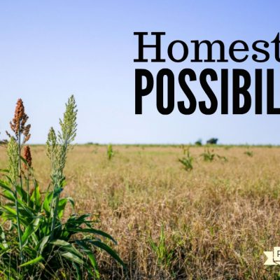 Full of Homesteading Possibilities