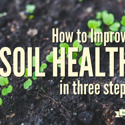 How to Improve Your Soil in 3 Steps