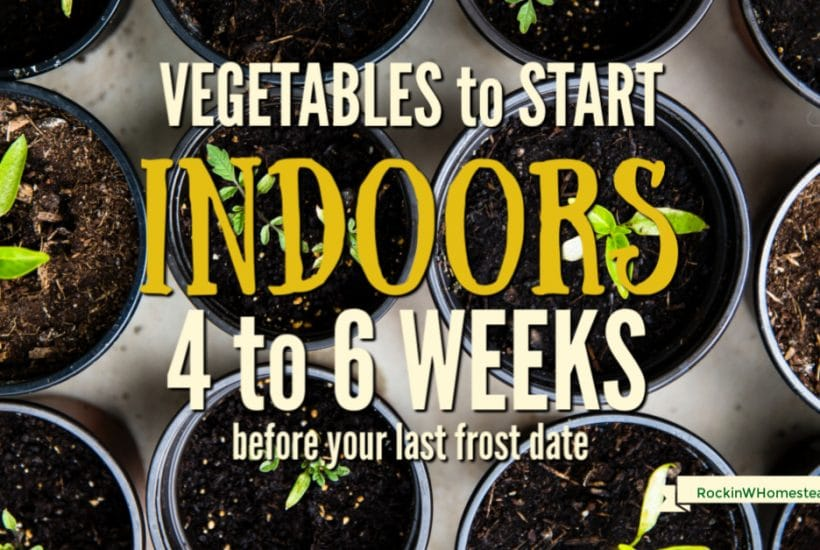 """There are many joys and benefits to be gained by starting your own garden indoor from seed. The toughest part is knowing what to plant at specific times so the seedlings are not held too long indoors. Here's the third installment of our """"What to Plant"""" series."""