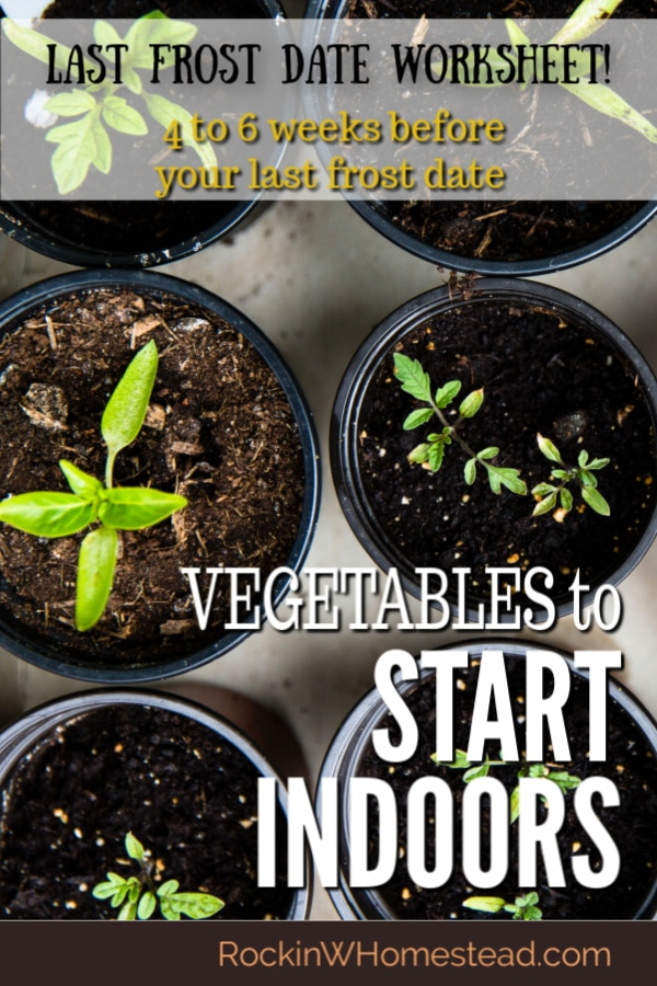 There are many joys and benefits to be gained by starting your own garden indoor from seed. The toughest part is knowing what to plant at specific times so the seedlings are not held too long indoors. Learn what to plant indoors 4 to 6 weeks before last frost date