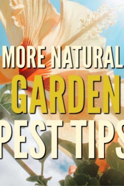 As the gardening season ramps up, the pests can really become a problem. Use these tips to get a handle on natural garden pest control.