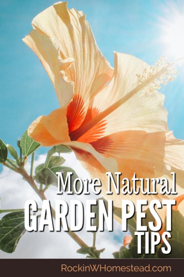 More Natural Garden Pest Tips