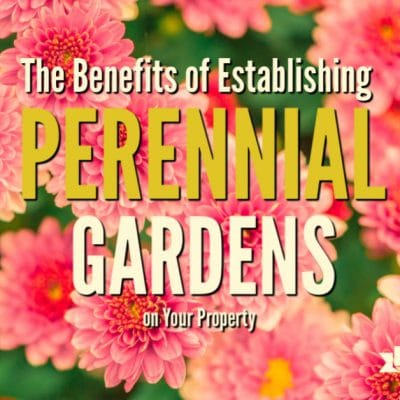 The Benefits of Establishing Perennial Gardens on Your Property