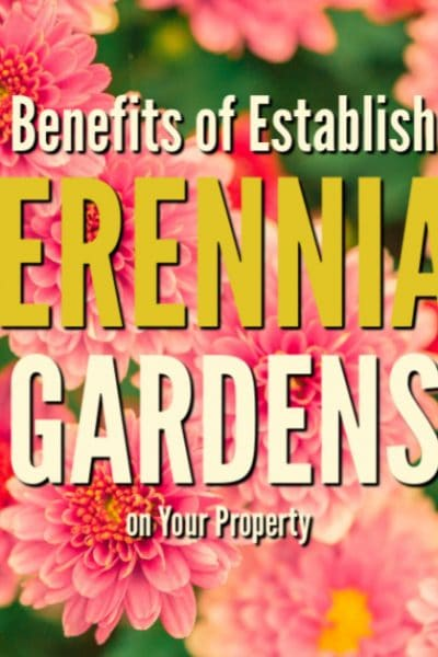 Perennial gardens are the backdrop of every homestead. These four tips will get you started planting different types of perennial gardens in all corners of your property.