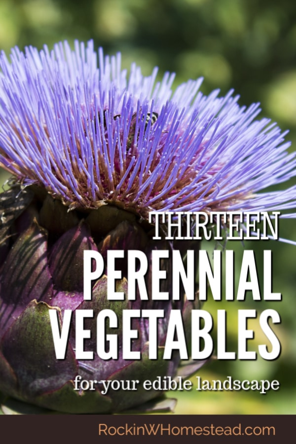 Perennial vegetables are often low maintenance and offer a way to extend your harvest from year to year. While the variety may be limited, making room for these 13 vegetables will pay off in the long run.