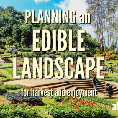 Planning Your Edible Landscape