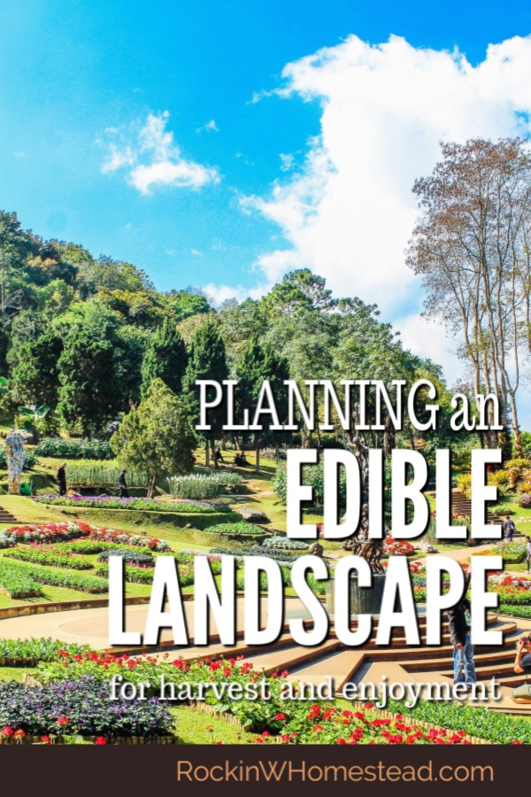 Planning your edible landscape for success. There may be hundreds of growing parts to our yard, but including edibles in the mix is worth it. Get planning tips here.