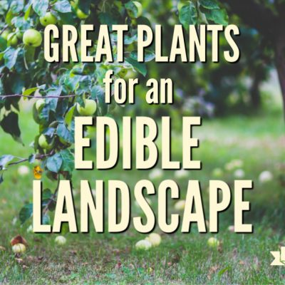 Great Plants for an Edible Landscape