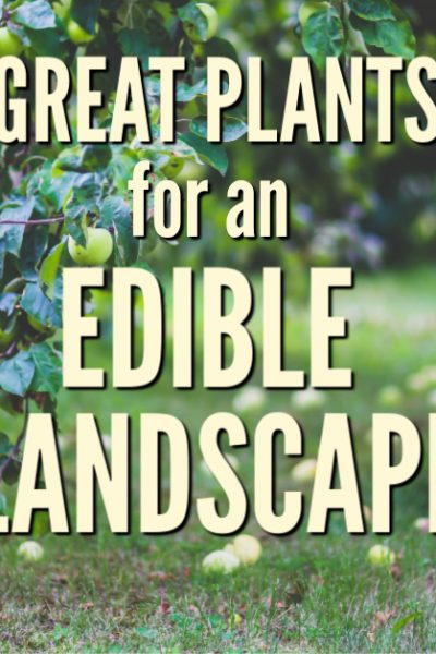 Consider these plants for an edible landscape and create an edible paradise that is uniquely yours. Get ideas for trees, shrubs, and flowers.