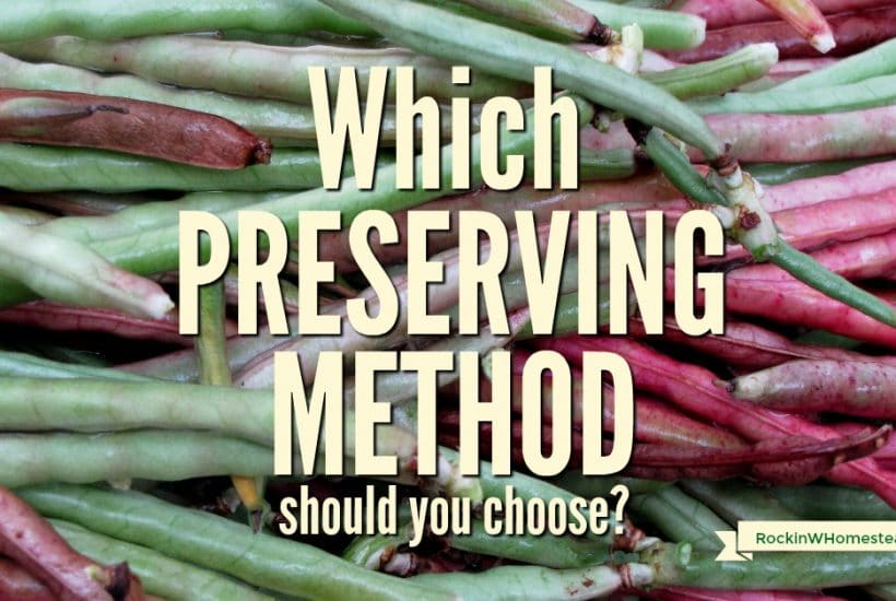 With just a bit of preplanning and our handout, you can decide what preservation methods to use for 50 different fruit and vegetable varieties.