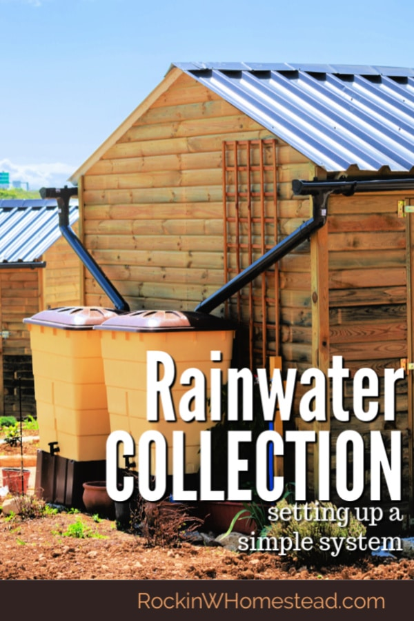 Rainwater collection is a great way to make the most of this natural, free resource. You can be ready for the next drought, these five tips will get you started implementing a system that works for your situation.