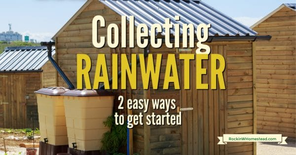 rainwater collection barrels beside a shed