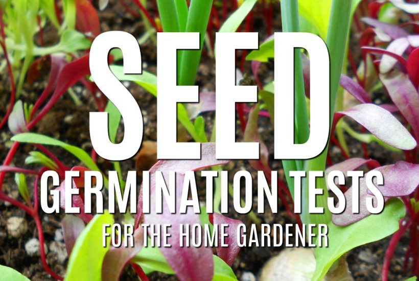 How can you tell if a seed is still viable? Here are three reliable seed germination tests you can take to see if there is life left in your old seed packets | Rockin W Homestead