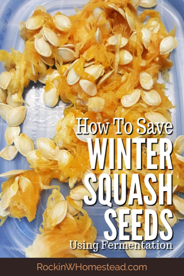When purchasing organic vegetables from the grocery store, try saving seeds from your favorite winter squash varieties for next year's harvest.